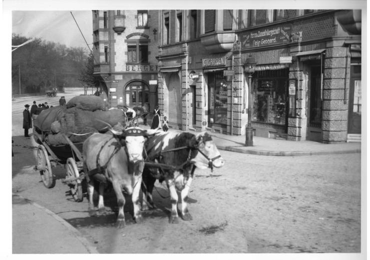 Eine historische Aufnahme eines Ochsenkarrens in Stuttgart Berg